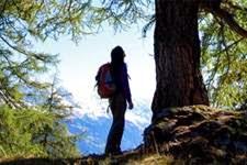 communiquer-energie-pouvoir-des-arbres