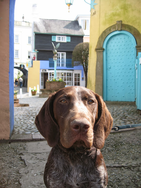 Coco in Portmeirion