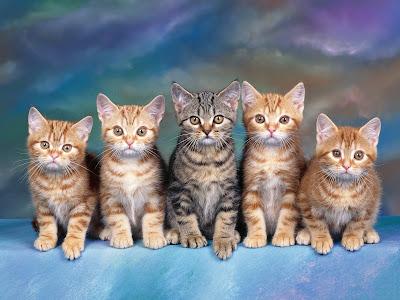 Hermosos gatitos posando para la foto
