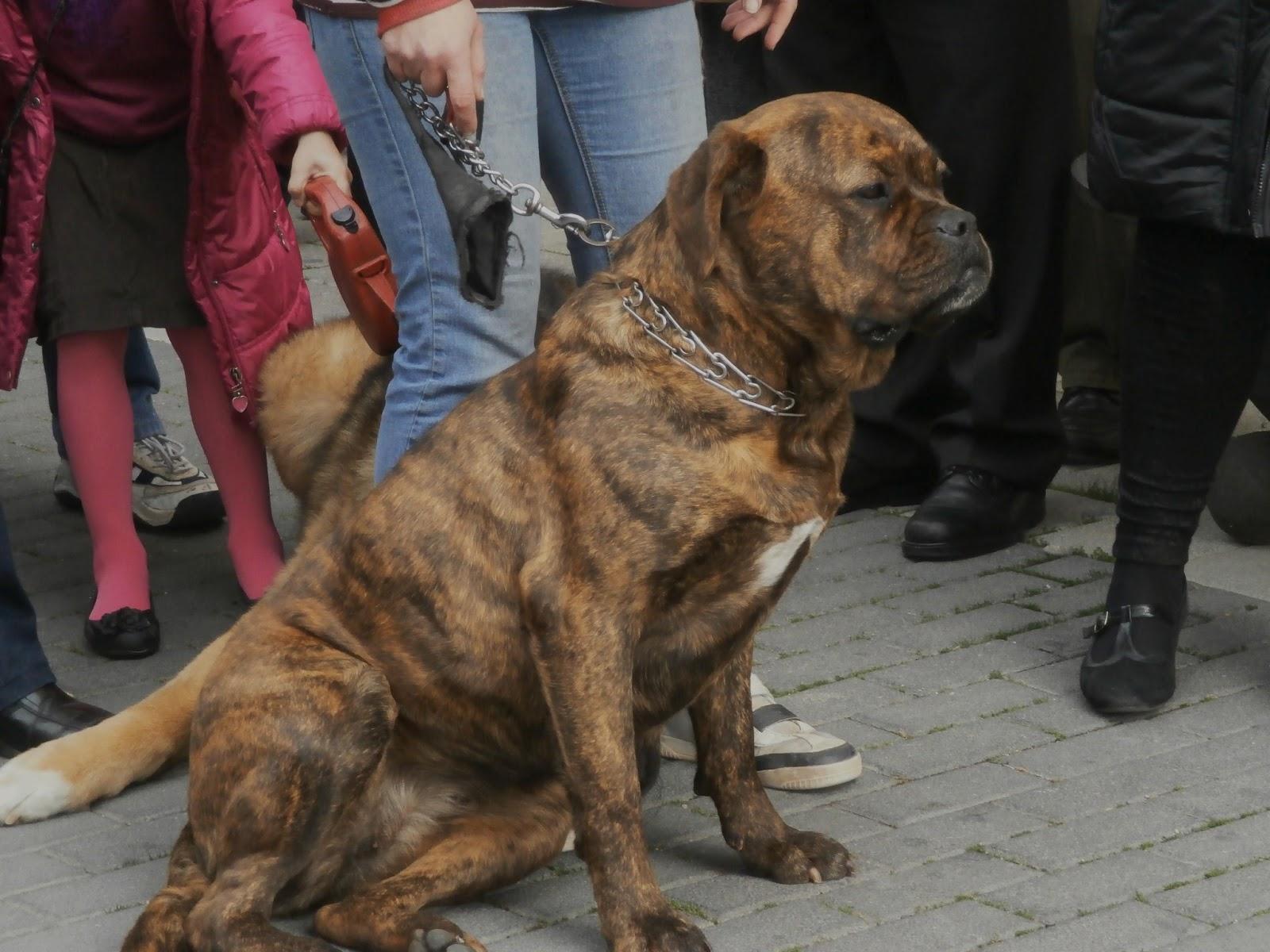 Resultado de imagen de Festa Fauna de Sant Antoni Cubelles
