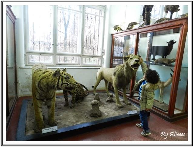 muzeul-de-zoologie