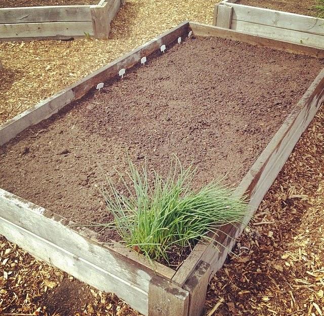 midsun community garden, garden plot,