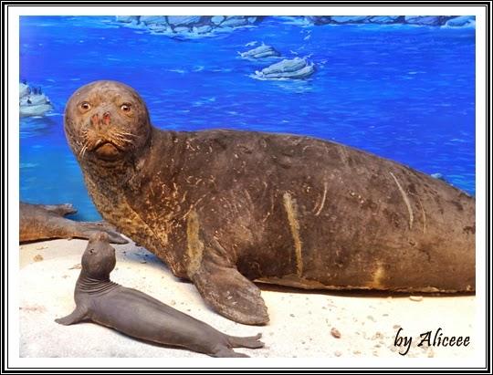 muzeul-antipa-bucuresti-foca