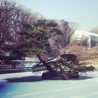 A tree inside Huwon in Changdeokgung Palace Seoul