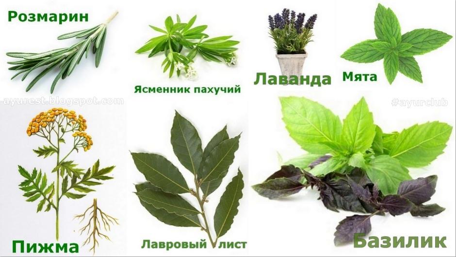 Растения отпугивающие мух