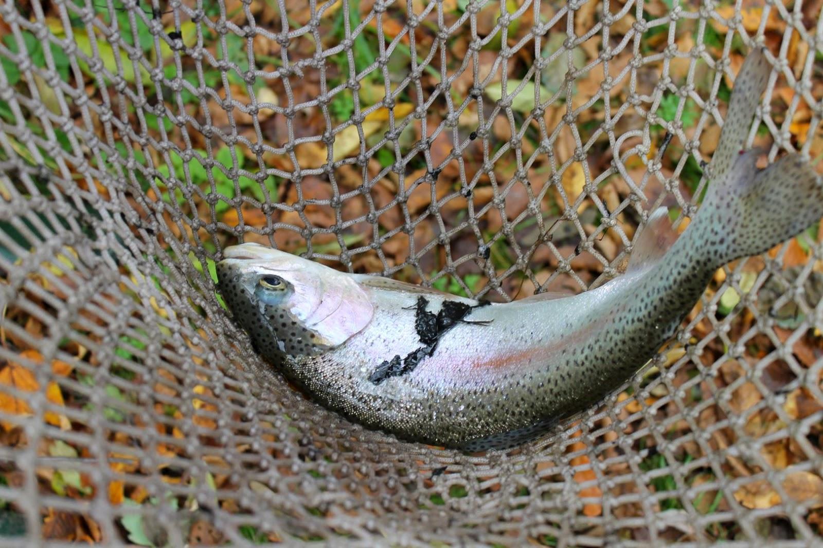 Moosauer hof aktuell oktober 2014 for Jungfische im teich
