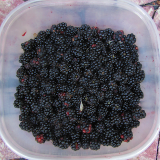 Bucket of Blackberries with Leaves and Fuzz
