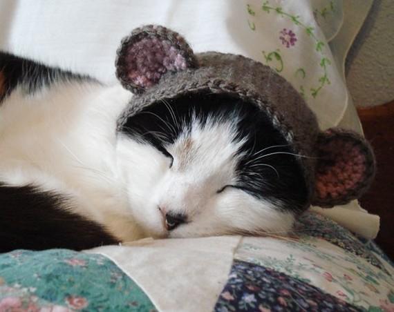 gatos con sombreros