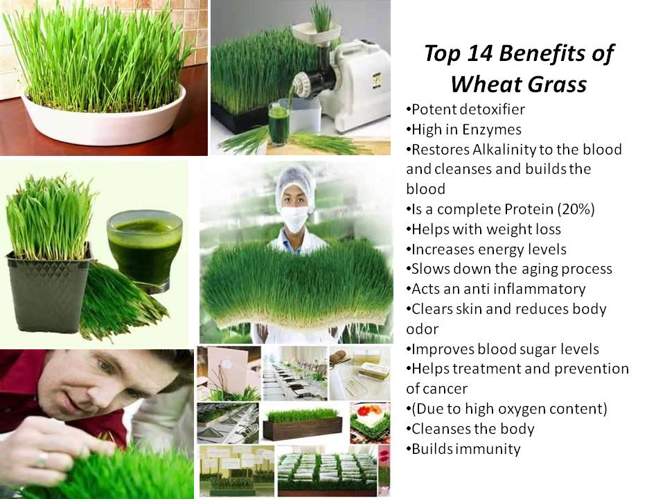 Health And Nutrition For Life Benefits Of Wheatgrass