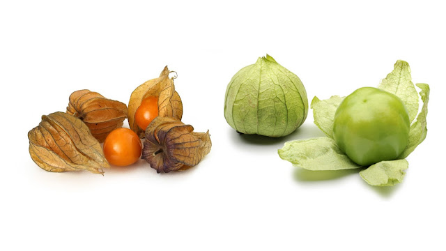 groundcherries and tomatillos