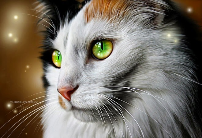 20 beautiful realistic cat drawings to inspire you fine