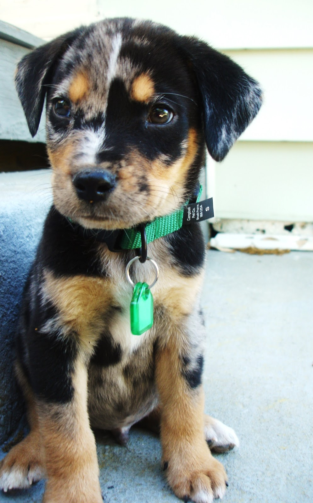 50 cute mixed breed dogs you need to know about for What a dog needs