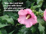"""""""O SENHOR sobre ti levante o seu rosto e te dê a paz."""" (Números 6.26)"""