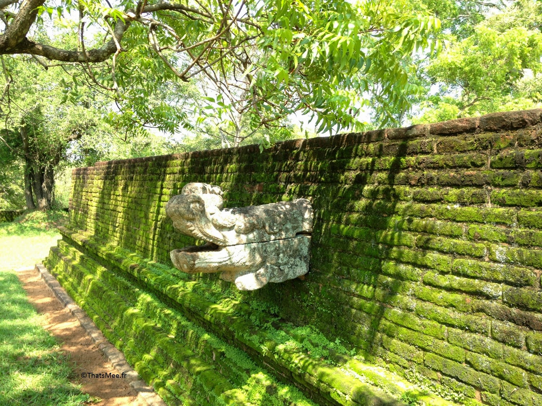 Polonnawura evacuation d'eau tête de dragon, triangle culturel Sri-Lanka