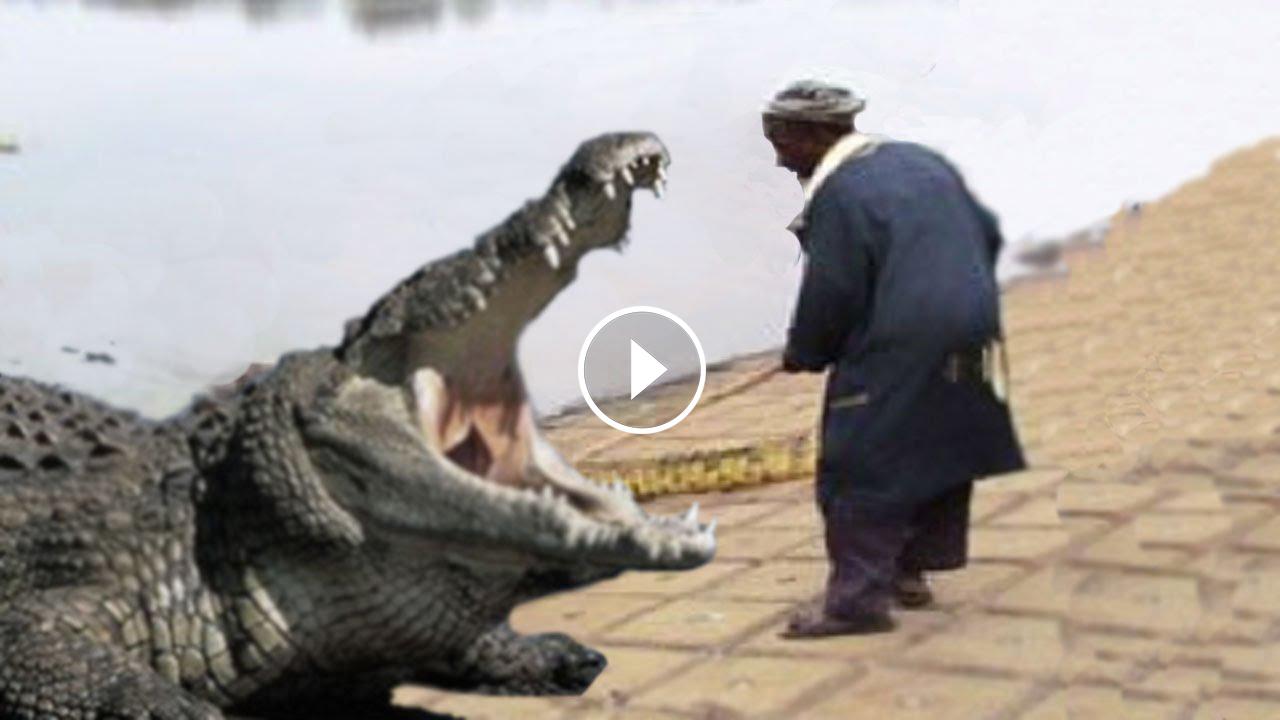 Crocodile Feeder Eaten By Giant Crocodile Entertainment
