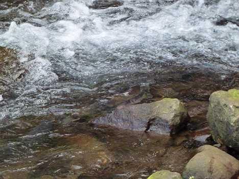 川袋川でサケの遡上