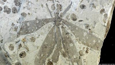 شاهد : عشرة أنواع جديدة من الكائنات الحية 130524120731_juracim