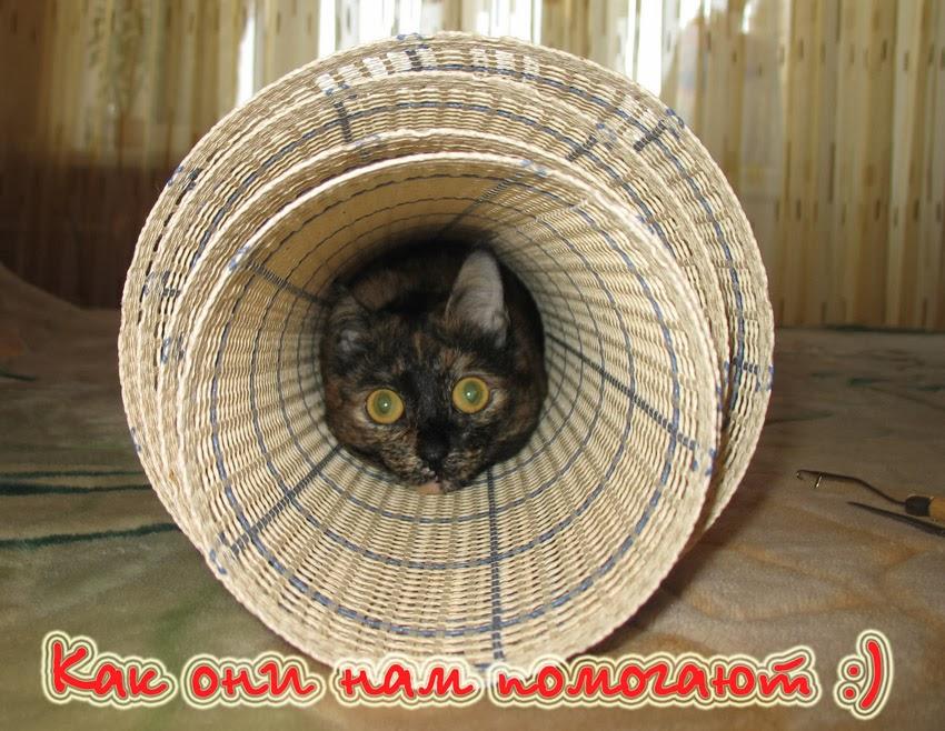 Домашние любимцы и наше хобби - Галерея постов о наших помощниках )))