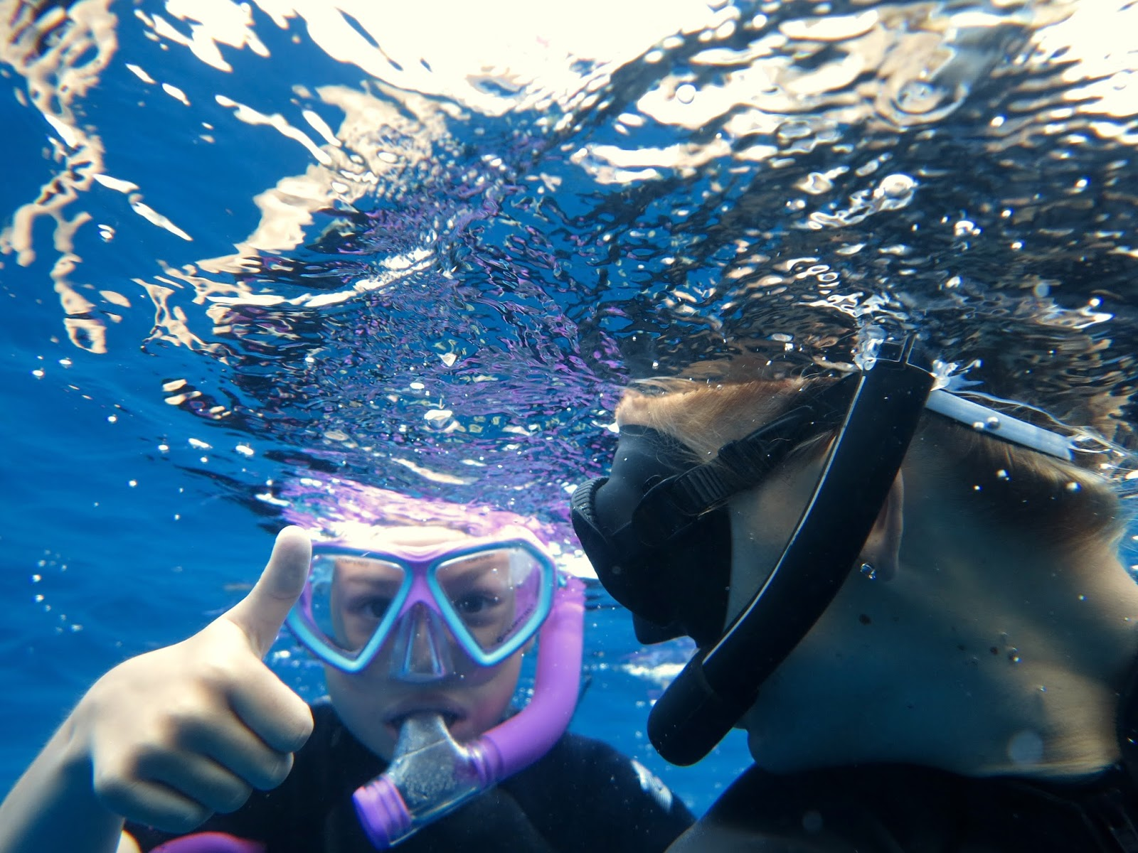 swim with dolphins snorkel with manta rays whale watching boat