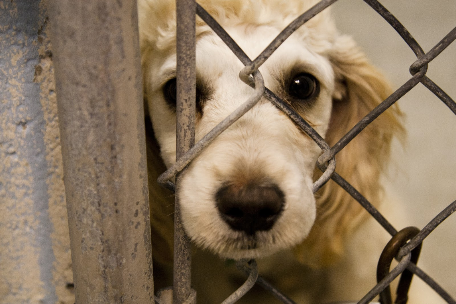 Do You Understand What Animal Cruelty Is? - Neat-Pets ...