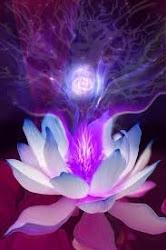 Lotus de Luz Universal