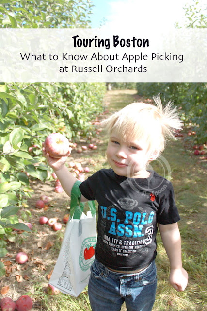 What to Know About Apple Picking at Russell Orchards