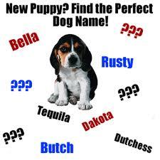 Koleksi Nama Nama Anjing Terpopuler Dan Lucu