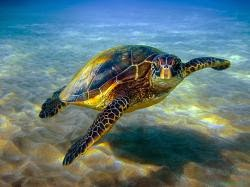 dream, give up, surrender, flying, higher, sea turtles