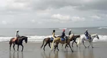 Bali Horse Riding and Jatiluwih Tour