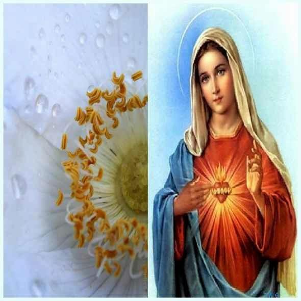 Rose - Symbol of Holiness
