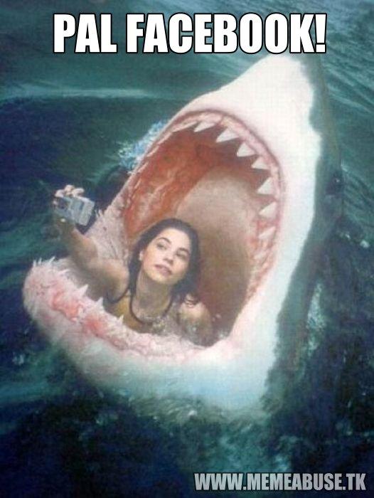 Tiburón PAL FACEBOOK