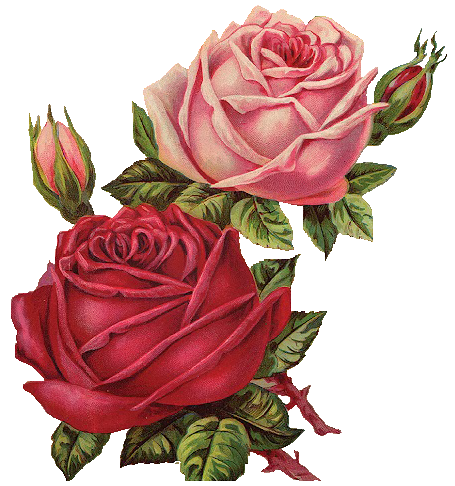 Leaping frog designs vintage pink and red roses free png for Free rose garden designs