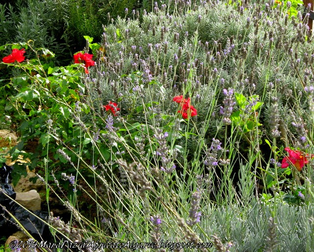 lavenders and red roses