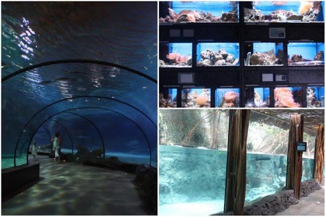 Acuario Oceanium en el Zoológico de Rotterdam o Diergaarde Blijdorp