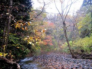 渓谷の河原