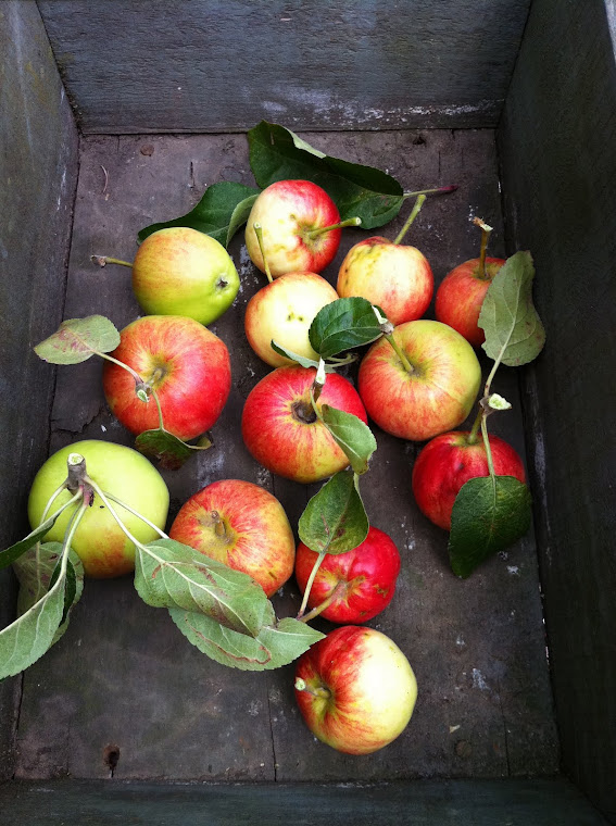 Apples from the Garden