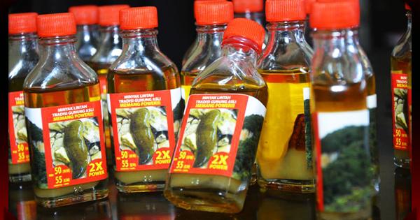 cara mengurut zakar menggunakan minyak lintah