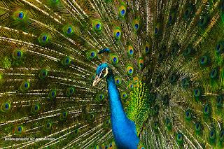 Burung faforit indonesia