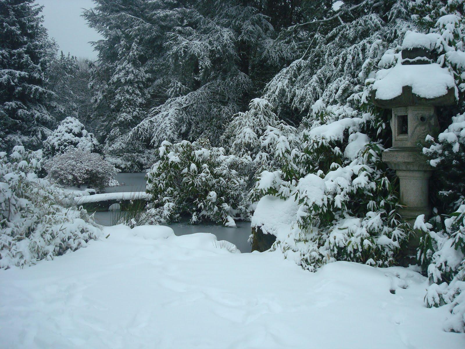 black dragon tea bar kubota garden in winter