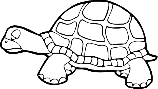 Turtle Coloring Pages Free Printable Pictures Coloring Coloring Page Of Turtle