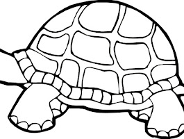 Cute Sea Turtle Coloring Pages