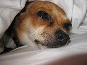 Beautiful Cute Dogs And Disktop Wallpapers cute dog