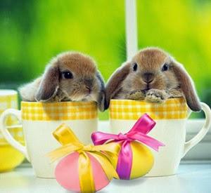 Cute Easter Bunnies in cups