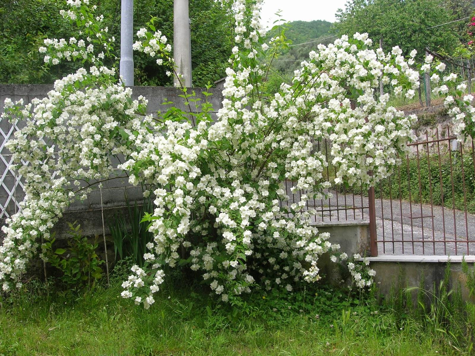 Semola angoli di giardino for Foto angoli giardino