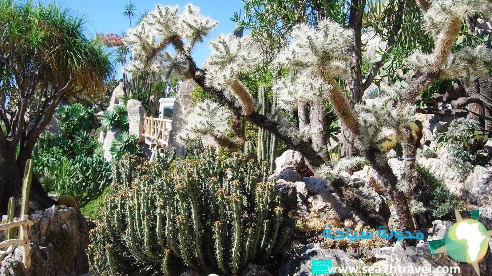 حديقة النباتات الغريبة في موناكو