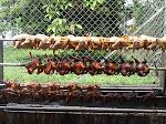 ~ Ayam Golek Seri Mayang ~