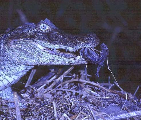 Fauna Autóctona