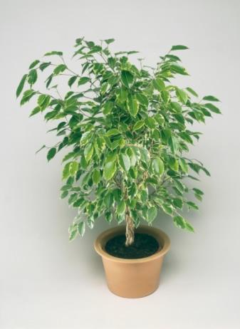 Комнатные растения помогут привести