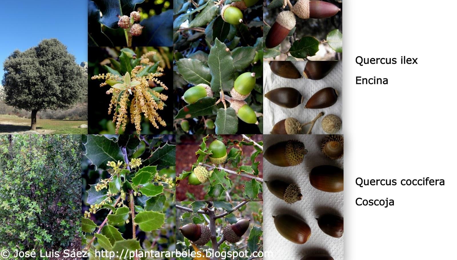 Plantar rboles y arbustos tipos de frutos y semillas - Arboles y arbustos ...