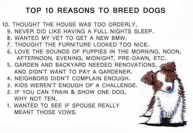 Dog Owners Pledge
